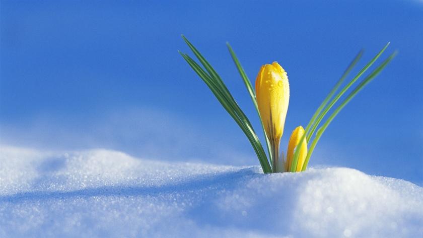 snow-flower_1600x900